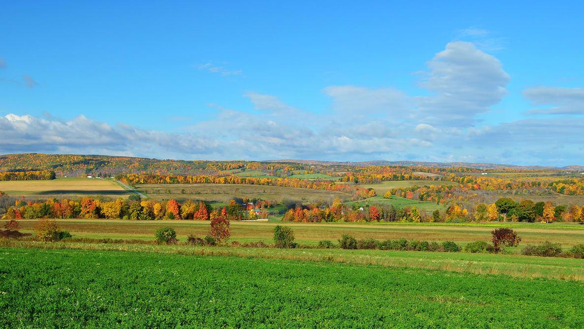 Fall Foliage On The Hillside Of Upstate Ny