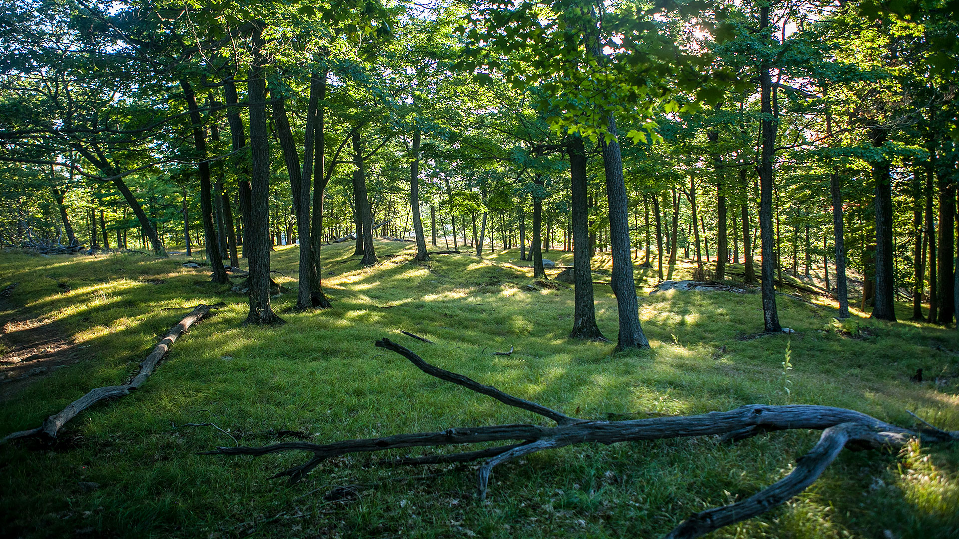 grass-and-forest-in-new-york